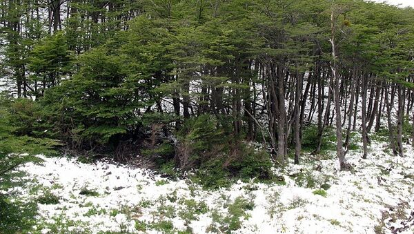 В предгорьях Анд выпал снег