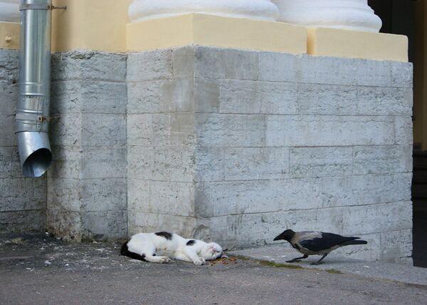 Кошки - главная угроза для популяций городских птиц, считают ученые
