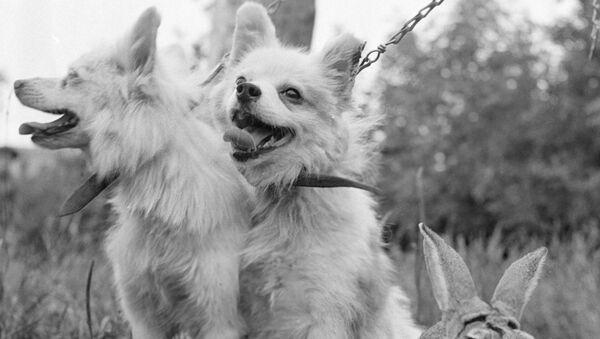 Собаки Отважная, Малек и кролик Звездочка