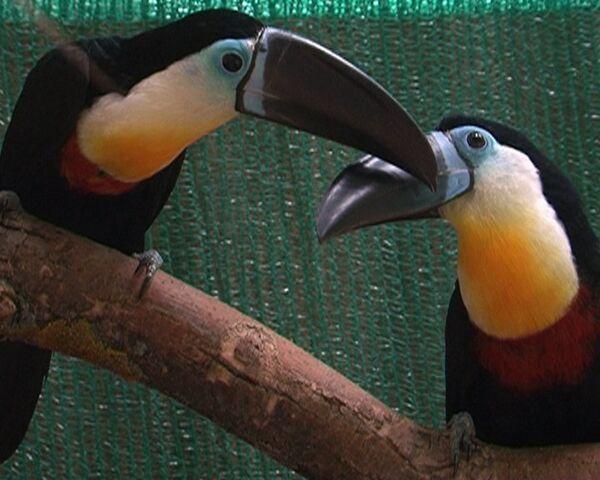 Птицы живут под прицелом видеокамер в реалити-шоу для пернатых