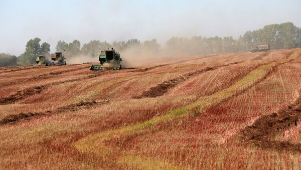 Уборка урожая гречихи в Алтайском крае