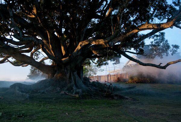 Кадр из фильма Дерево, который откроет в этом году кинофестиваль 2 in 1