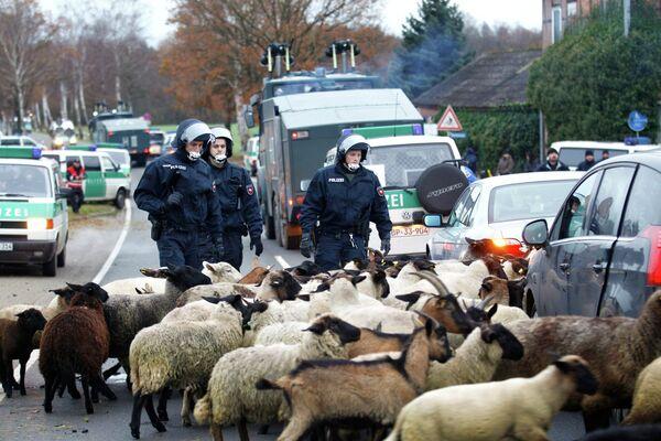 Жители Германии вывели на улицу даже овец, чтобы заблокировать поезд с ядерными отходами