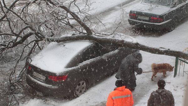 Упавшее на автомобиль дерево. Архивное фото