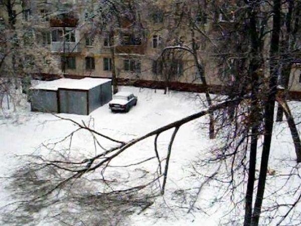 В Кузьминках падают деревья