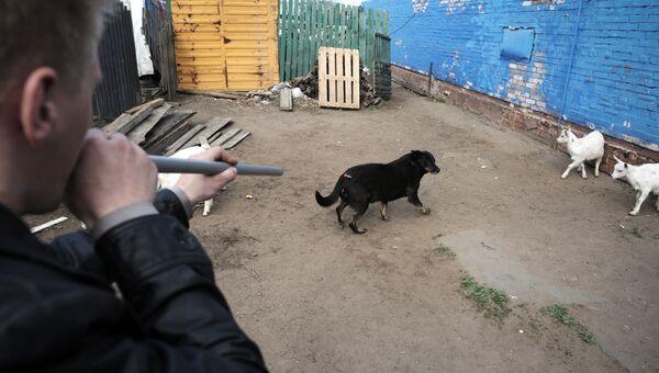 Отлов бездомных собак. Архивное фото