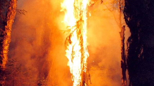 Верховой лесной пожар. Архив