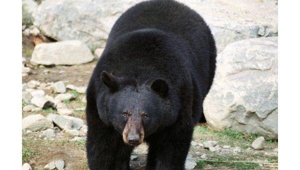 Медведь. Архив