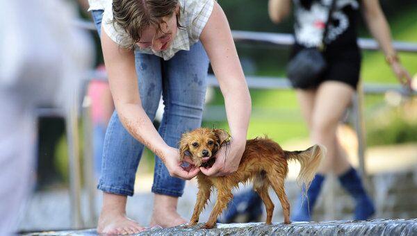 Девушка купает собаку в фонтане