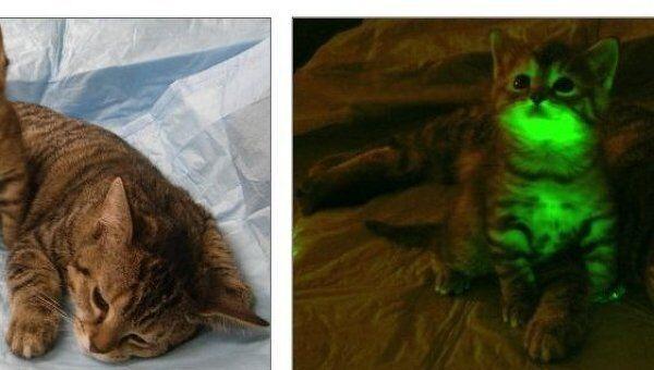 Обычная кошка и светящийся котенок