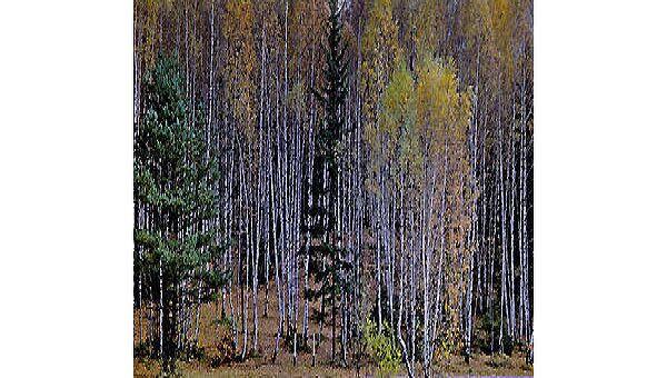Лес. Архив