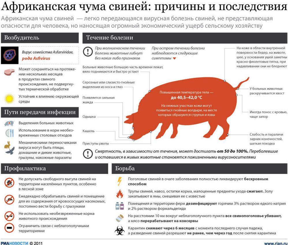 Симптомы и профилактика африканской чумы свиней
