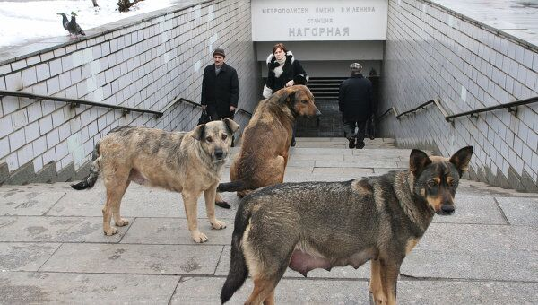 коронавирус антиген у собаки