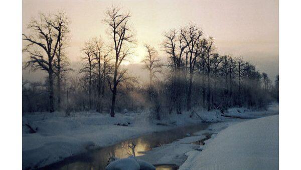 Зимний лес. Архив