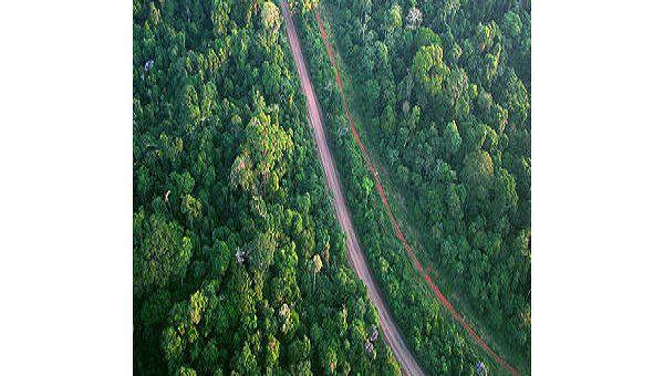 Леса Амазонии. Архив