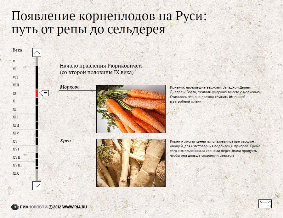 Появление корнеплодов на Руси: путь от репы до сельдерея