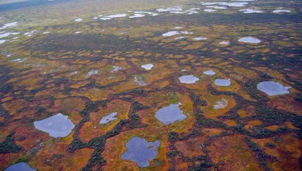 Васюганское болото в Томской области, архивное фото