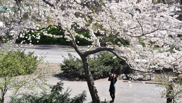 Деревья расцвели в Нью-Йорке на три недели раньше срока