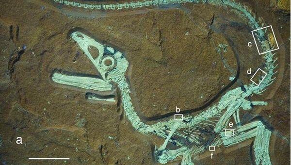 Детеныш динозавра Sciurumimus albersdoerferi обладал пушистым беличьим хвостом