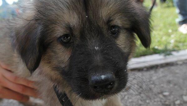 Выброшенный на улицу щенок. Архивное фото