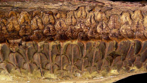 Микроструктура зубов эдмонтозавра