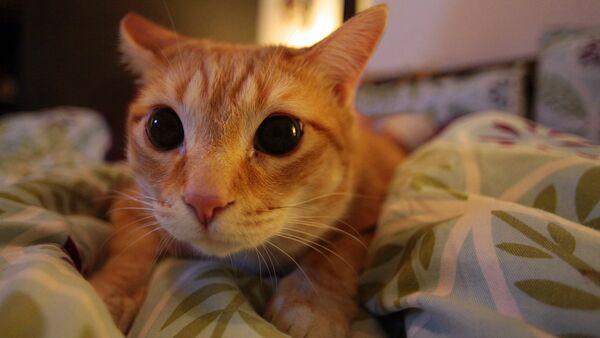 Кадр из фильма Кошачья мята: путь к забвению? (Catnip: Egress to Oblivion?)