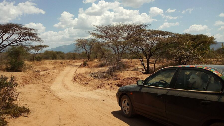Африка. Кения. Саванна