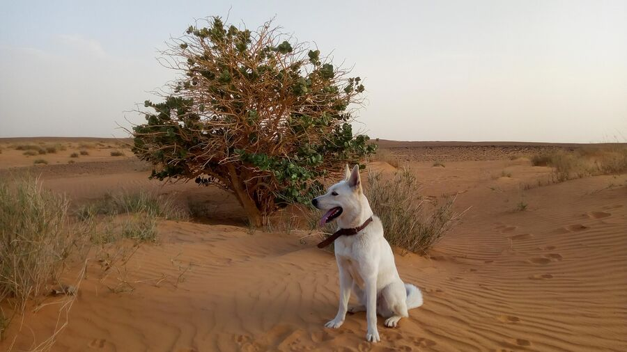 Африка. Судан. Нубийская пустыня