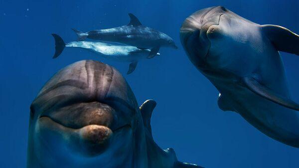 Друг всех дельфинов