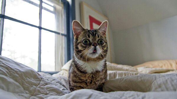 Кошка по кличке Лил Баб