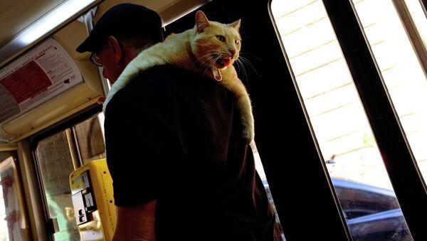 Мужчина несет кота на плече в автобусе