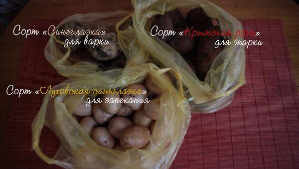 Чем отличаются разные сорта картофеля. Видеоэксперимент