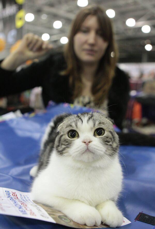 Выставка кошек Экспокот 2012