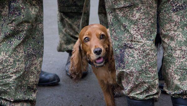 Служебная собака. Архивное фото