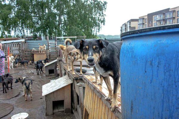 Приют для животных новосибирск сайт и фото