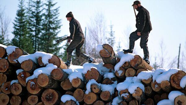 Заготовка леса в Хабаровском крае. Архивное фото