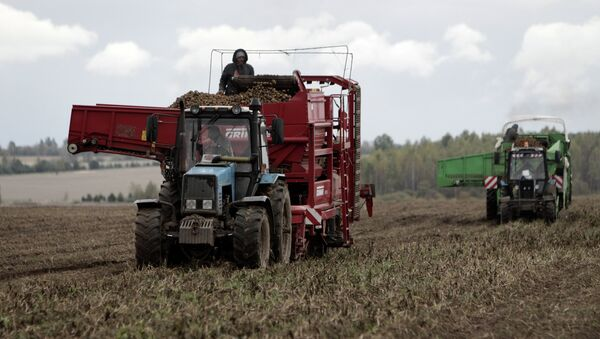 Уборка картофеля на полях Муромского района Владимирской области. Архивное фото