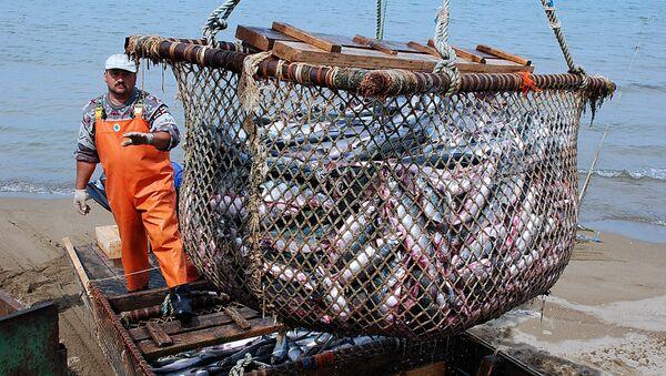Рыболовецкое хозяйство на Камчатке. Архивное фото