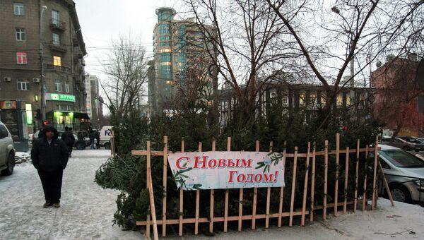 Продажа новогодних елей на улице в Новосибирске, архивное фото