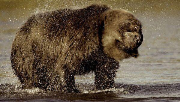 Медведь. Архивное фото
