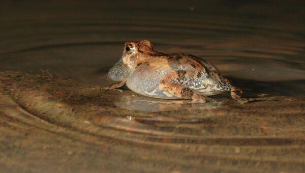 Подобная рябь на воде позволяет летучим мышам-листоносам ловить тропических лягушек
