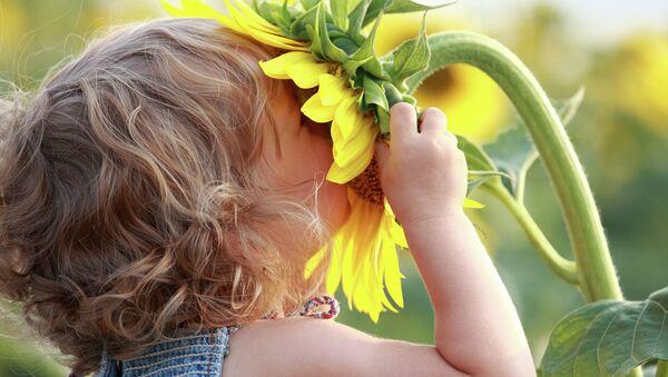 Девочка нюхает подсолнух, архивное фото