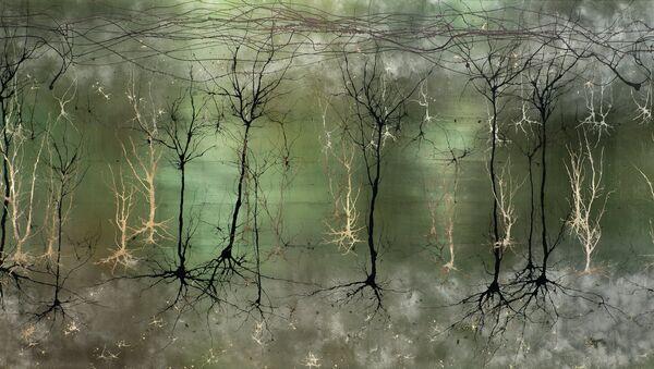 Визуализация сложной структуры коры головного мозга, напоминающей лес. Архивное фото