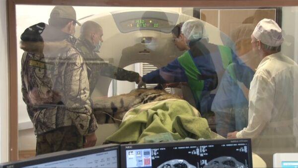 Травмированного тигра обследовали на томографе во Владивостоке