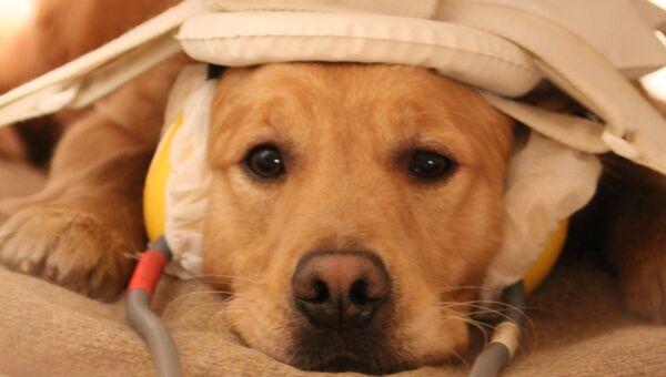 Собака внутри томографа во время эксперимента