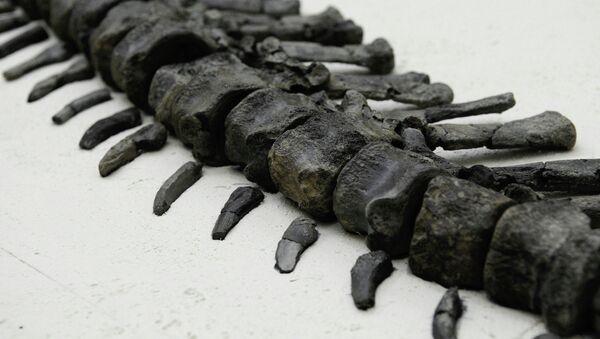 Скелет стегозавра. Архивное фото
