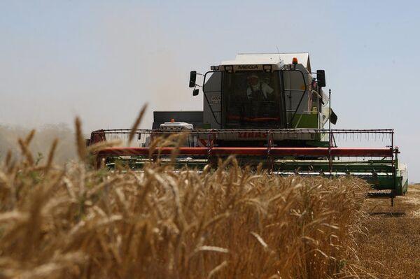 Уборка урожая на пшеничном поле