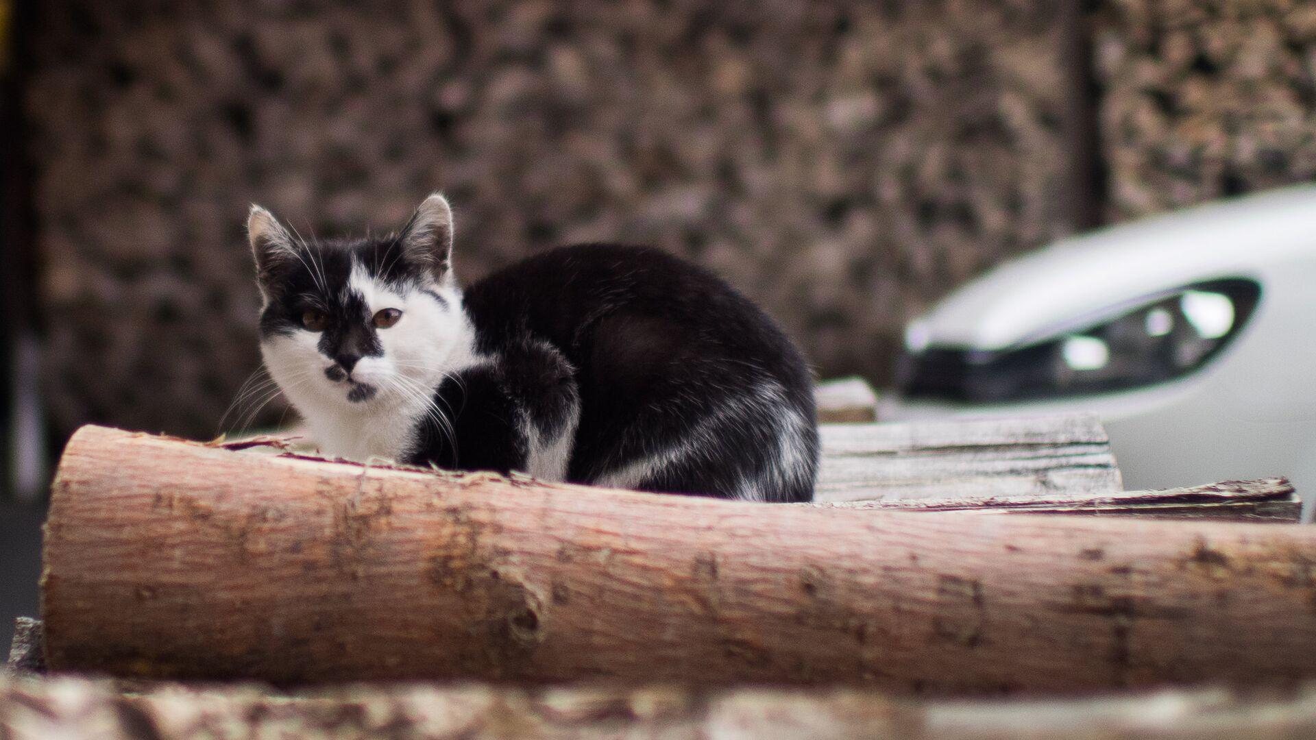 Кошка на территории биоотеля - РИА Новости, 1920, 02.10.2020