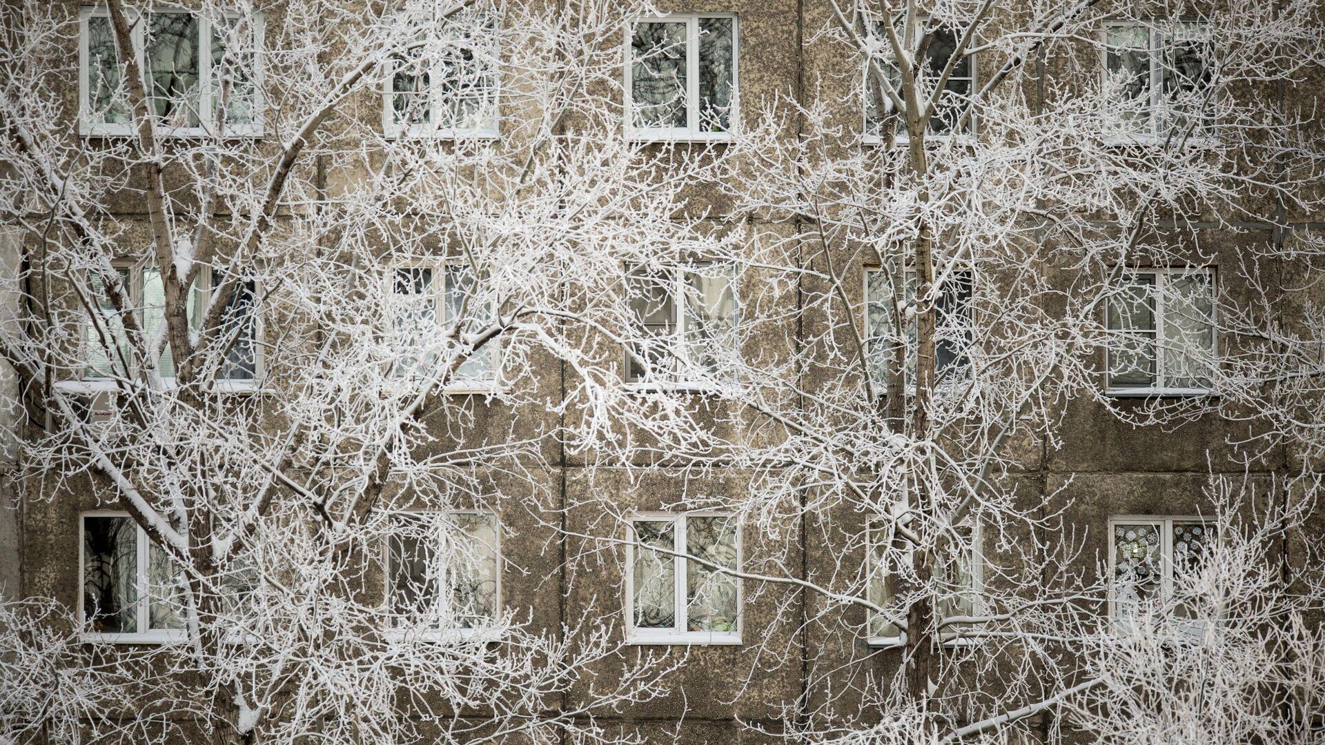 Покрытые инеем ветки деревьев у жилого дома - РИА Новости, 1920, 09.03.2021