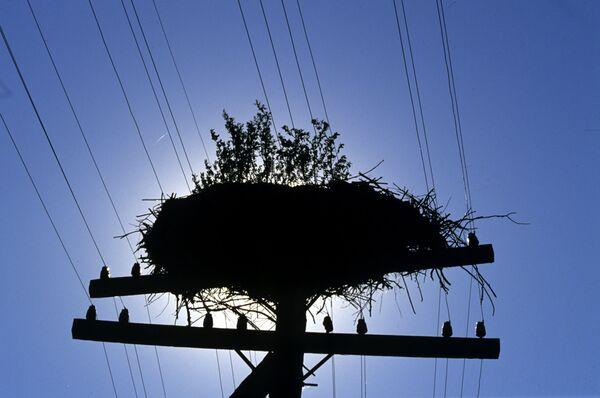 Брошенное гнездо аиста в деревне Чудяны